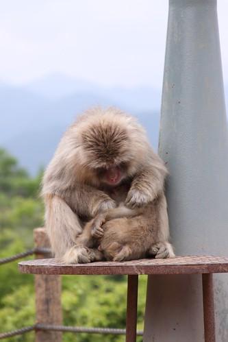 What monkeys do.