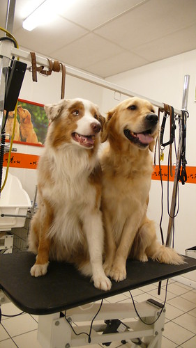 Valéas and Charlie at the doggroomer