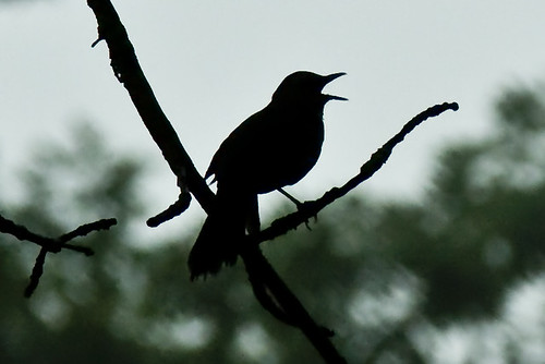 Morning serenade in Rondeau Provincial Park