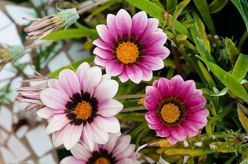 Días floridos