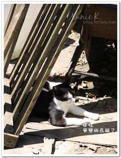 平溪線貓5