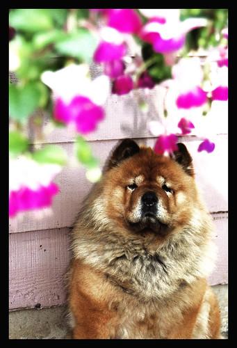 The prettiest flower in my garden...Meg!!