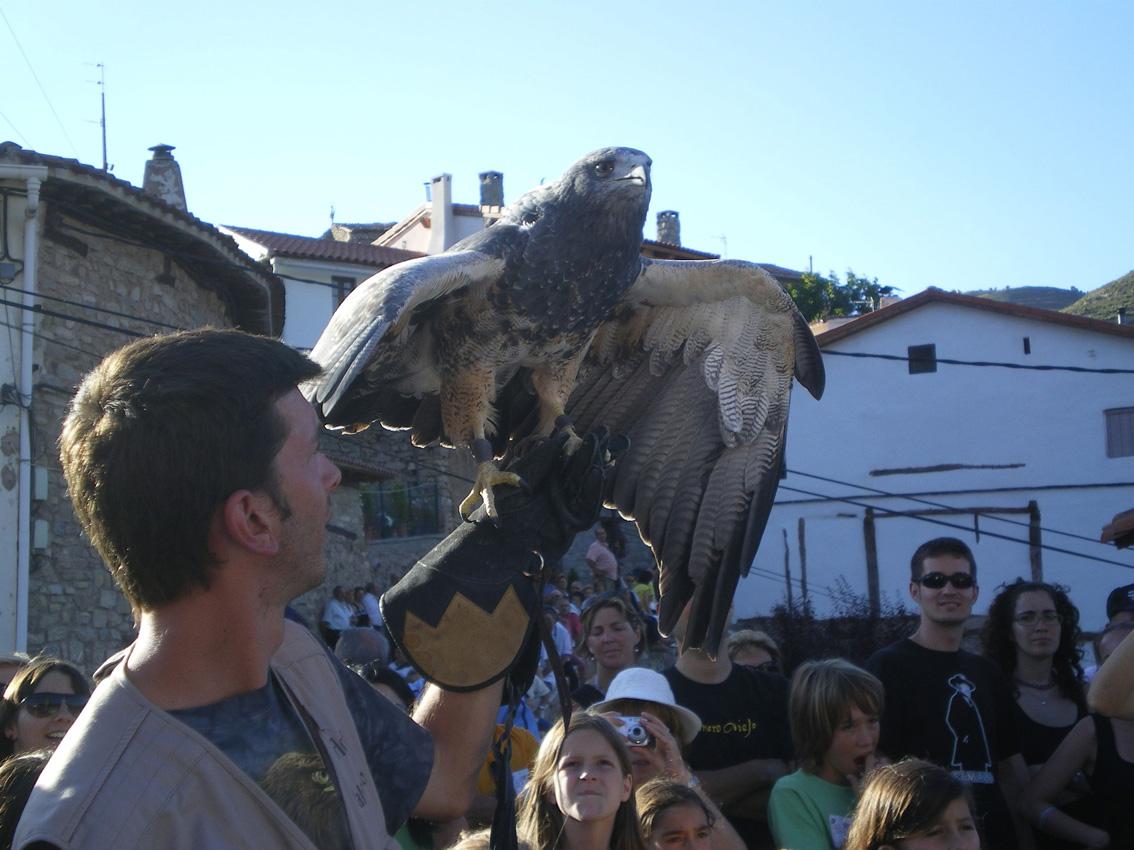 Impresionante imagen del Aguila escudada