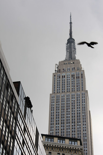 Empire State Building with Bird