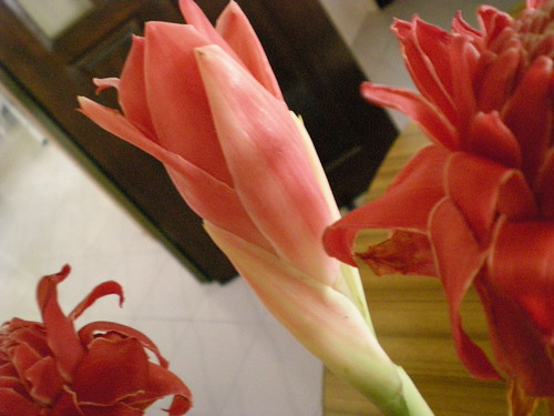 Torch ginger flower 2