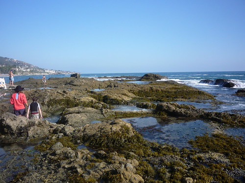 Tide Pools by you.