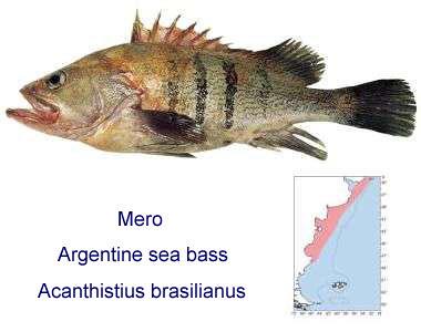 mero, een vis
