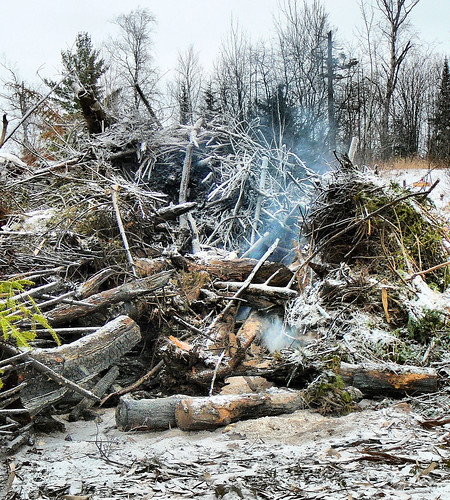 Brush pile section after burning for 24 hours