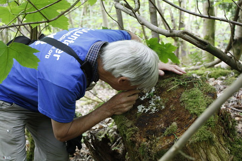John Bailey inspecting slime mold