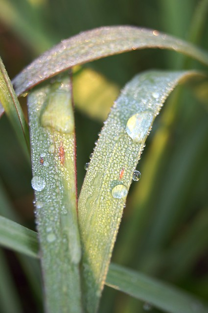 Water Drops on Grass 2