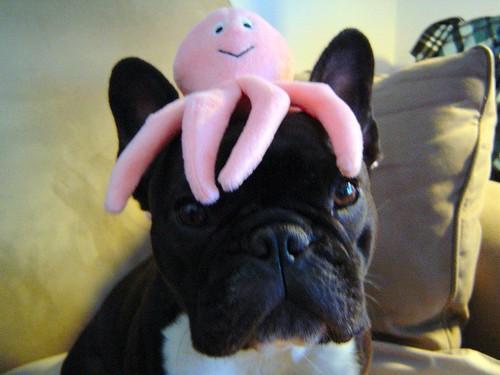 Octopus Hat Sushi