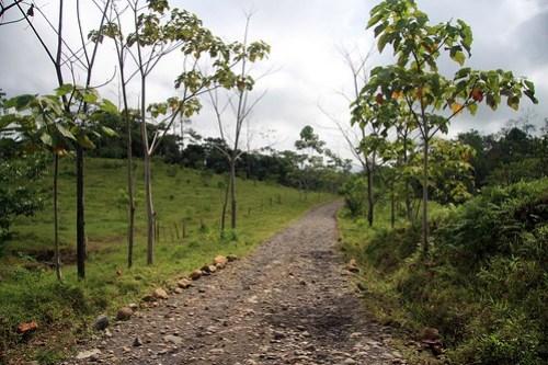Costa Rica - Día 5 (364)