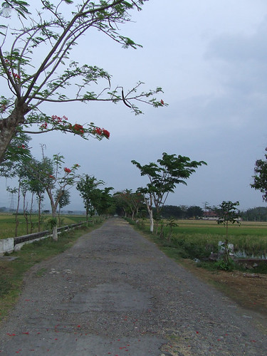 country_road1