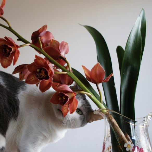 #191 - Grandmother's Orchid with Cat