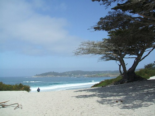 Cypress on Carmel Beach