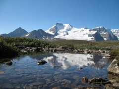 Mt. Athabasca Reflected