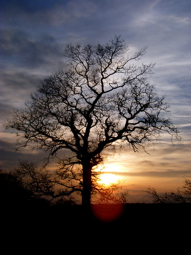 Tree Silhouetted