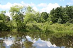 Turtle Pond West