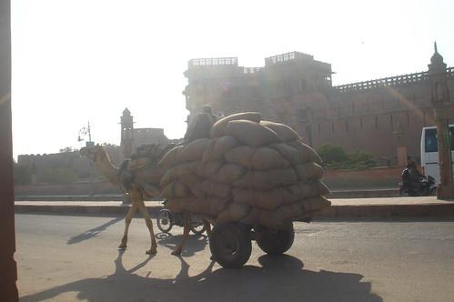 Jaipur路上1-54