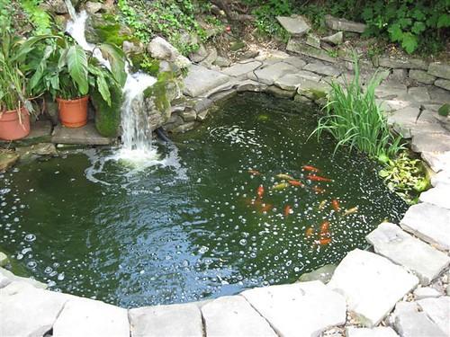 How Does Your Garden Grow That Woman 39 S Weblog