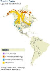 Tundra Swan Map