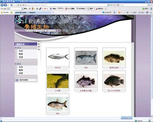20080307_ODAP-IE8