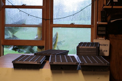 rainy window and seed trays
