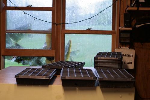 rainy window and seed trays