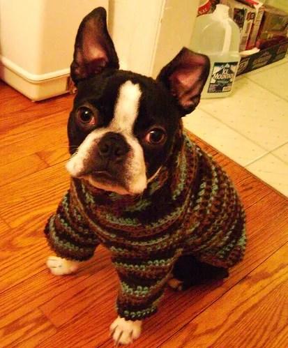 Iggy's Dog Sweater Pattern/Tutorial (1/6)