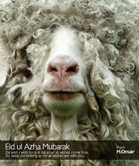 Eid al-Adha Mubarak (M.Omair) Tags: pakistan eid creative goat karachi omair mubarak eidcard eidulazha