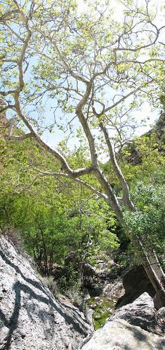 Grotto Pano