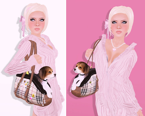 """""""The Z Bag"""" Ultimate Pet Carrier by you."""
