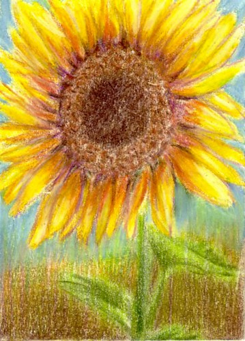 ATC - Sunflower - Reserved