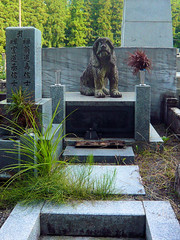 A dog's tombstone - Okunoin cemetary