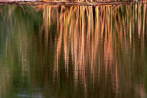 Grasses in Reflection por cobalt123