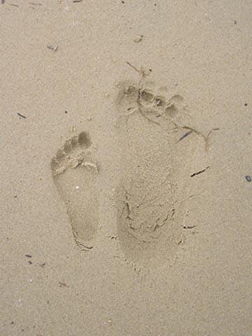 Footprints at South Hampton Beach