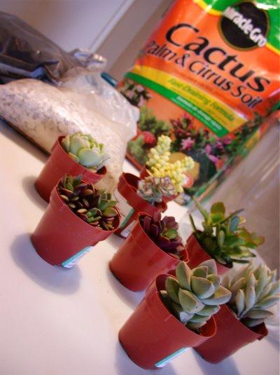 DIY Project: Succulent Terrarium