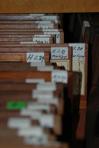 Collection Honegger