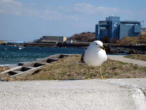 八戸 春の海 2