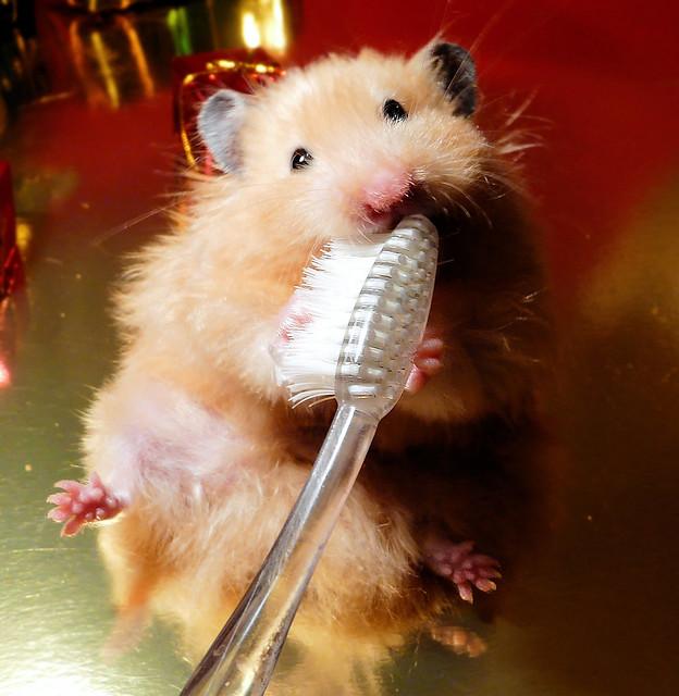 """I brush my Teeth!"" - Bułeczka"