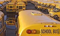 School Buses(US - style)