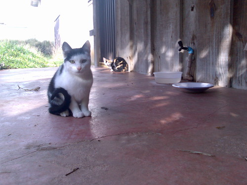 Temos gatos