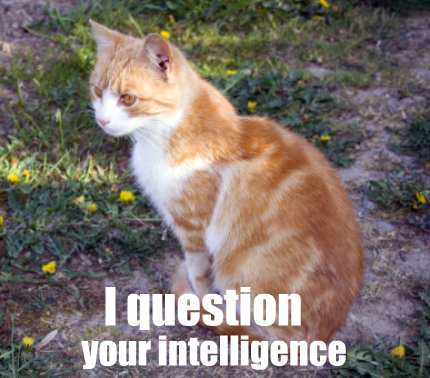 Intelligence question