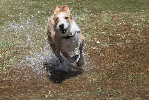 Vatten och en riktig vän (bild lånad från Flickr)