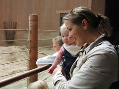 Watching an elephant