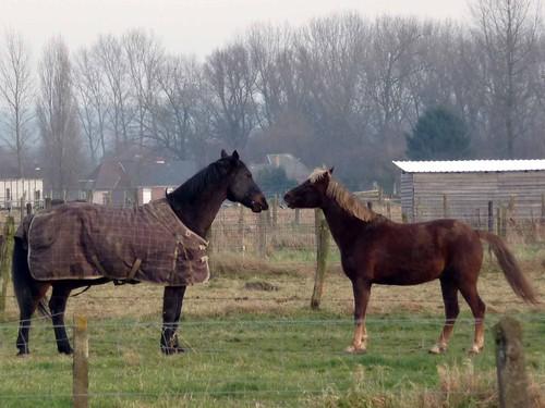Paarden in gesprek