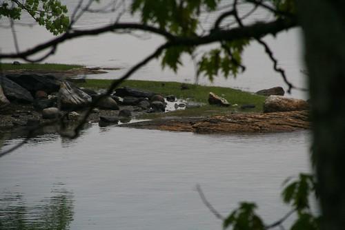 2008-05-31-freeport-camping-e-tree-shore