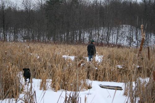 Marsh in winter