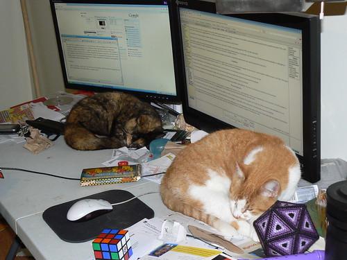 Elizabeth City - Dual Monitors, Dual Cats