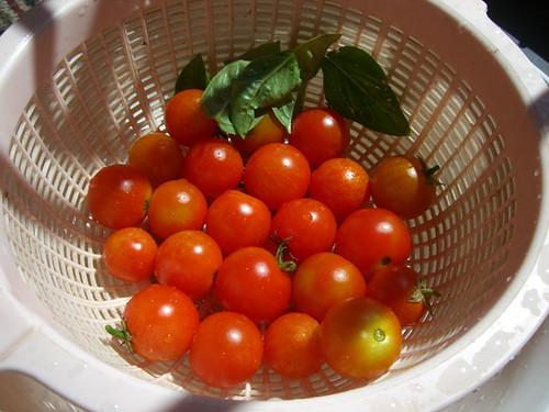 tomatoes last batch